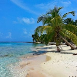 beach-sea-coast-tree-water-sand-1199740-pxhere.com