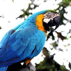 macaw-410144_1280